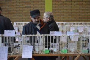 42 Wystawa Gołębi Pocztowych Okręgu Zielona Góra Grębocice 9-11,12,2016